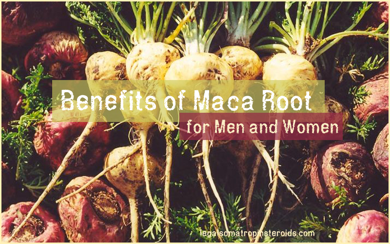 Maca Root benefits for men and women
